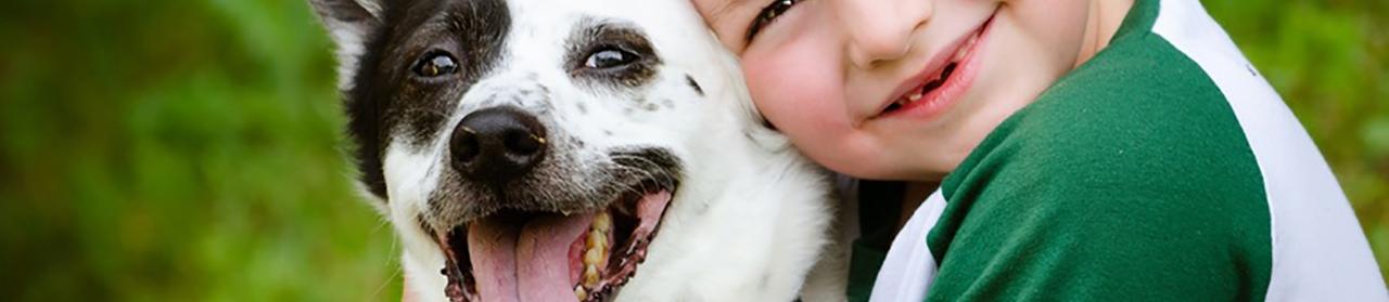Companion Animal Header Image
