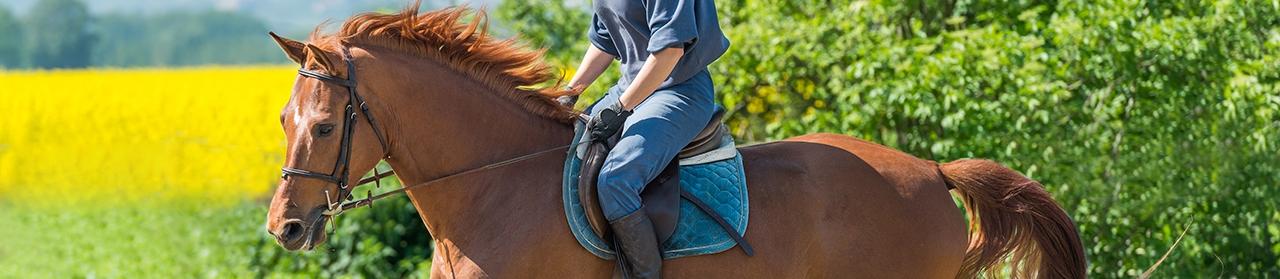 Horse Header Image